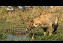 Vahşi Yolculuk Botsvana